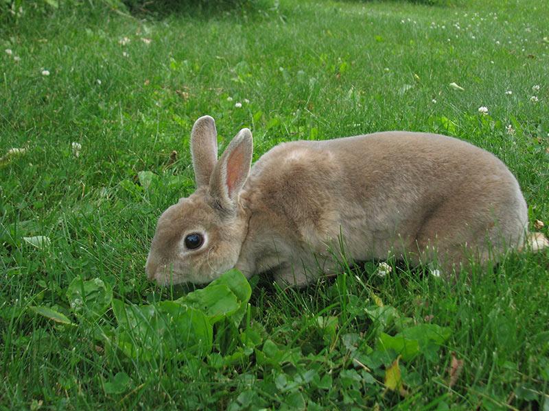 Abbey the Rabbit